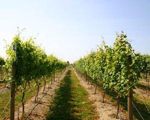 WA Winery